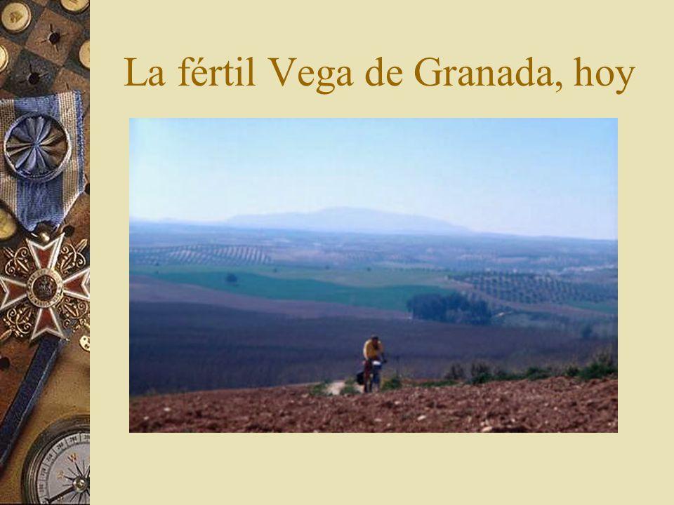 La fértil Vega de Granada, hoy