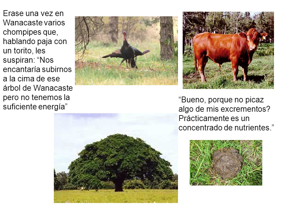 Erase una vez en Wanacaste varios chompipes que, hablando paja con un torito, les suspiran: Nos encantaría subirnos a la cima de ese árbol de Wanacaste pero no tenemos la suficiente energía