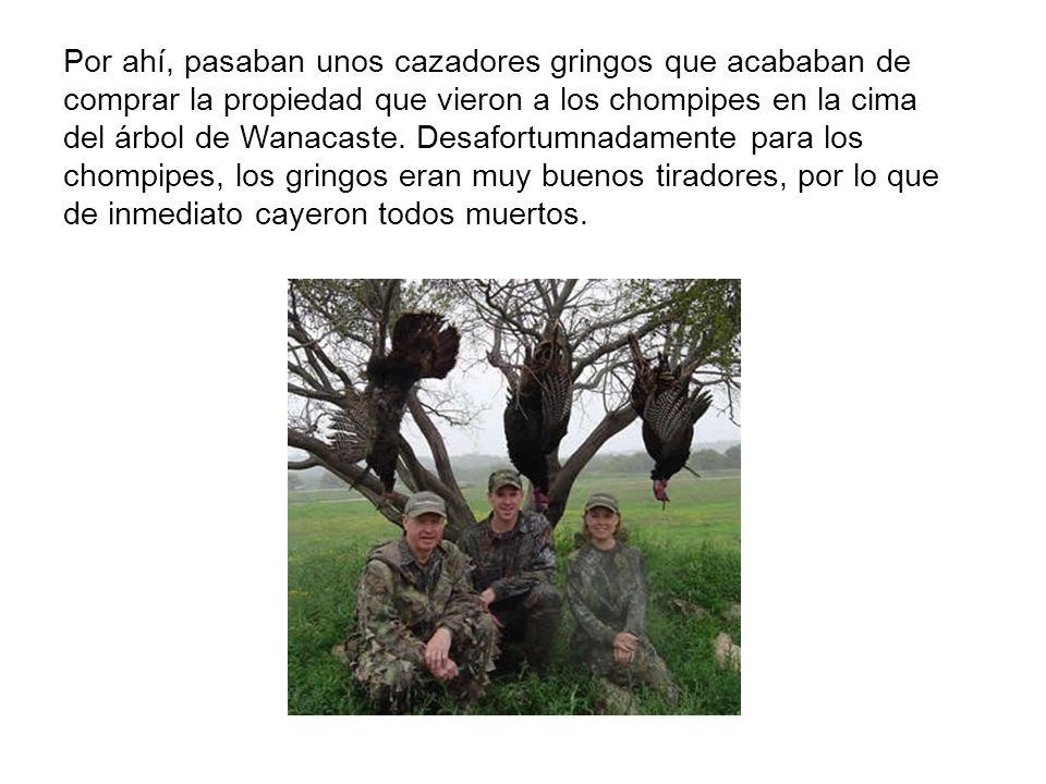 Por ahí, pasaban unos cazadores gringos que acababan de comprar la propiedad que vieron a los chompipes en la cima del árbol de Wanacaste.