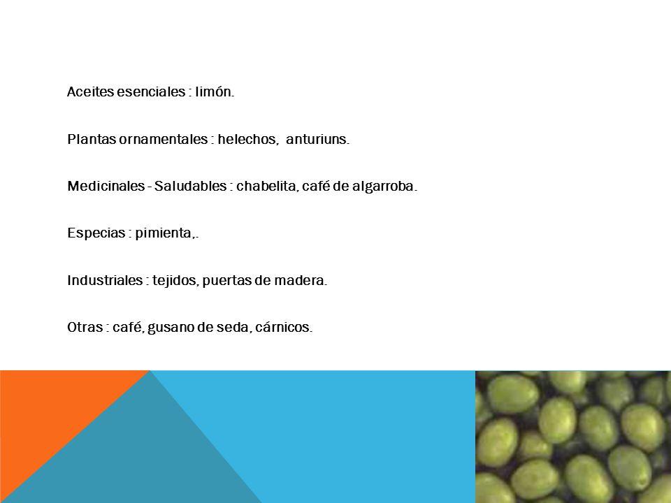 Agroindustria ppt video online descargar for Plantas ornamentales helechos
