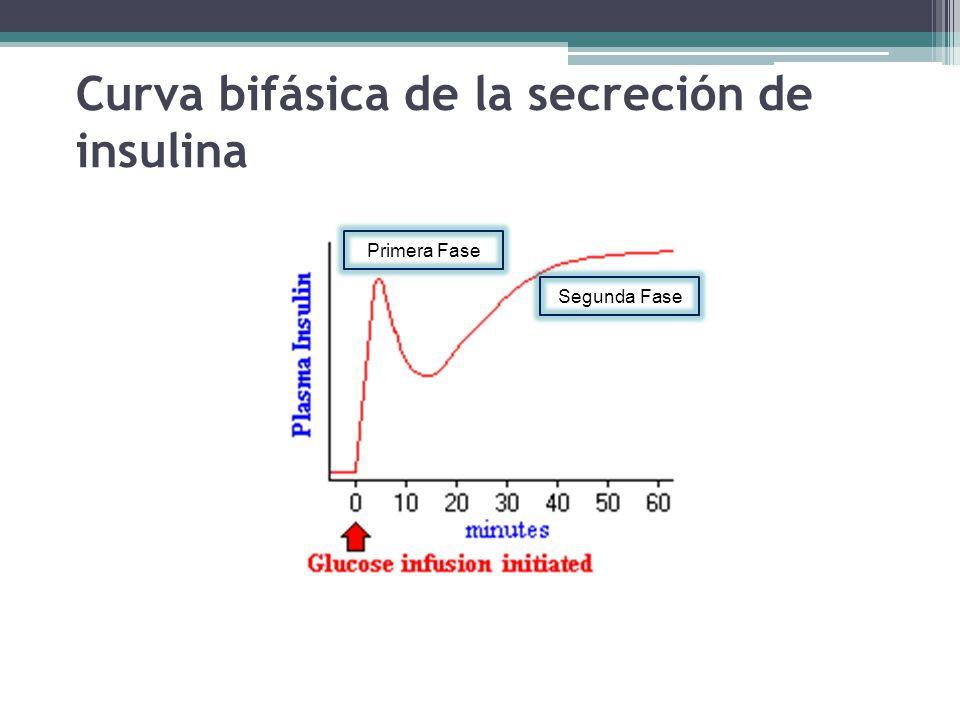 Fisiología Endocrina del Páncreas - ppt video online descargar