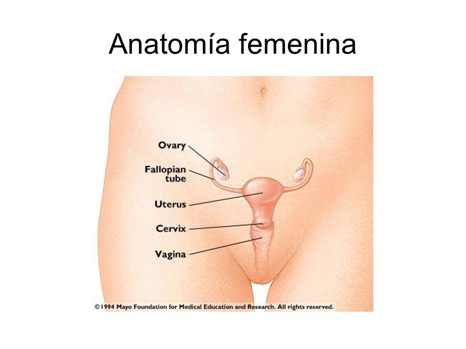 Atractivo Anatomía Femenina Canguro Bosquejo - Imágenes de Anatomía ...