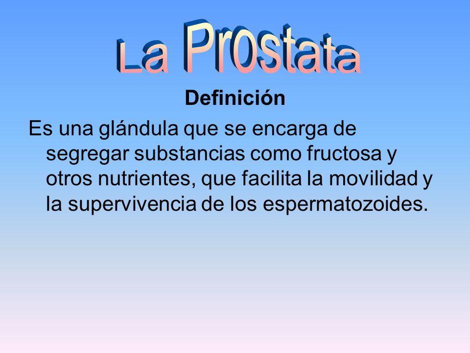 La Prostata Definición