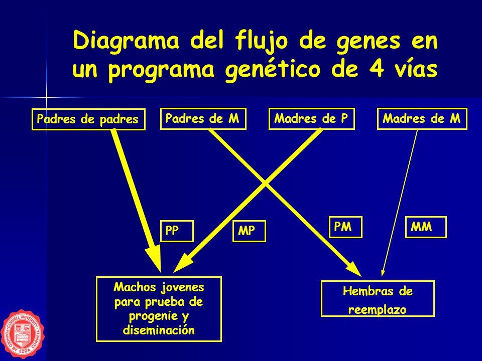 Genes programa