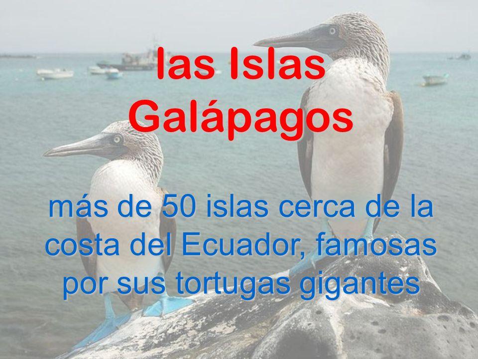 las Islas Galápagos más de 50 islas cerca de la costa del Ecuador, famosas por sus tortugas gigantes.