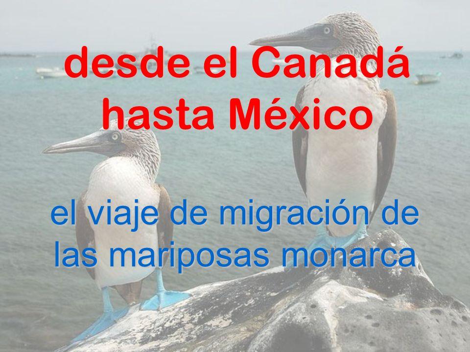 desde el Canadá hasta México