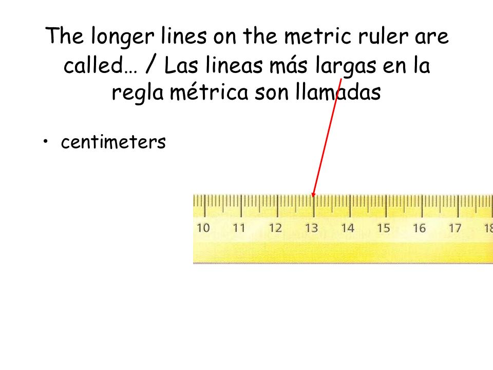 The longer lines on the metric ruler are called… / Las lineas más largas en la regla métrica son llamadas