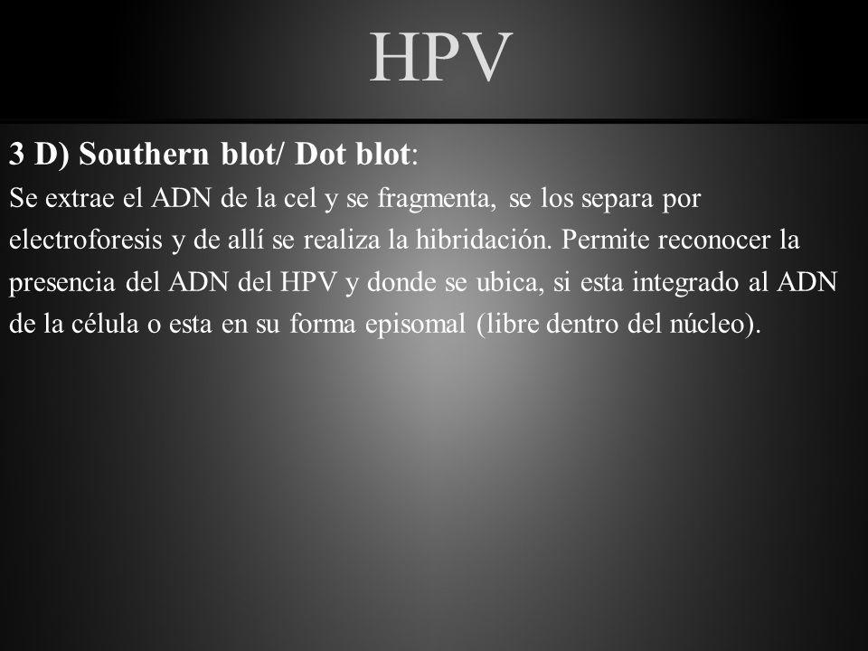 HPV 3 D) Southern blot/ Dot blot: