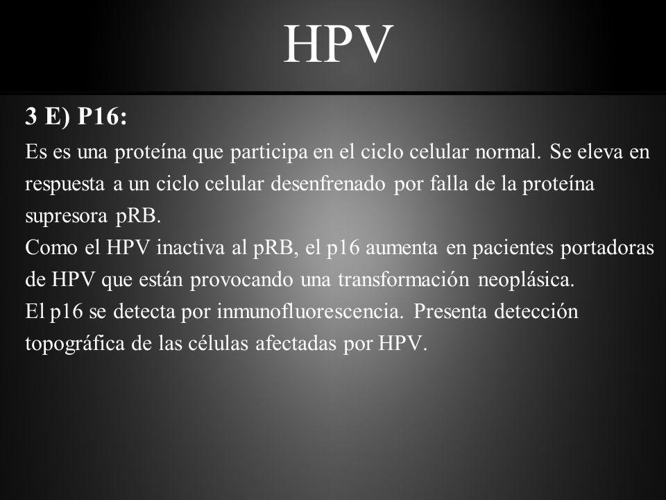 HPV 3 E) P16: Es es una proteína que participa en el ciclo celular normal. Se eleva en.