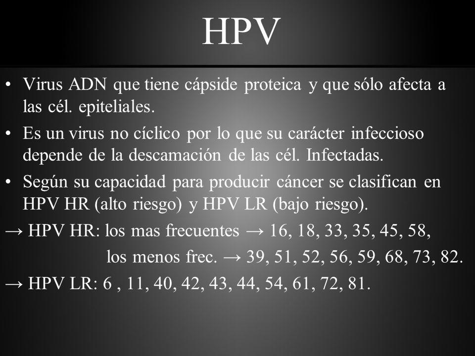 HPV Virus ADN que tiene cápside proteica y que sólo afecta a las cél. epiteliales.