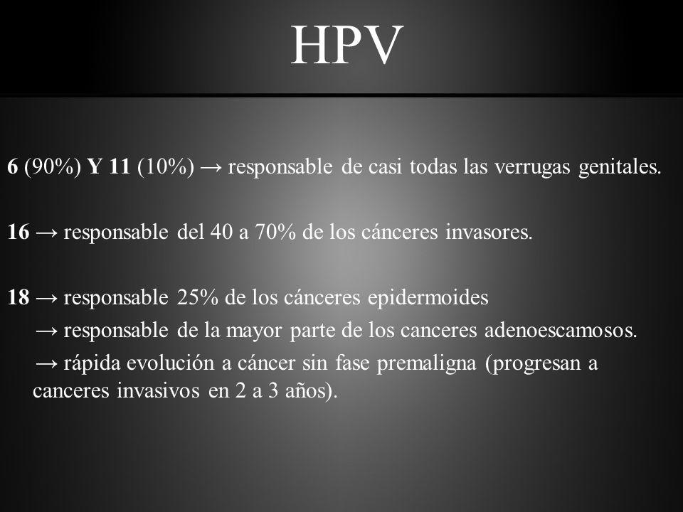 HPV 6 (90%) Y 11 (10%) → responsable de casi todas las verrugas genitales. 16 → responsable del 40 a 70% de los cánceres invasores.
