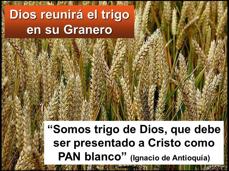 Dios reunirá el trigo en su Granero