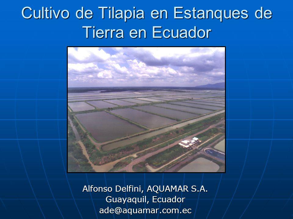 Cultivo de tilapia en estanques de tierra en ecuador ppt for Como cultivar tilapia en estanques