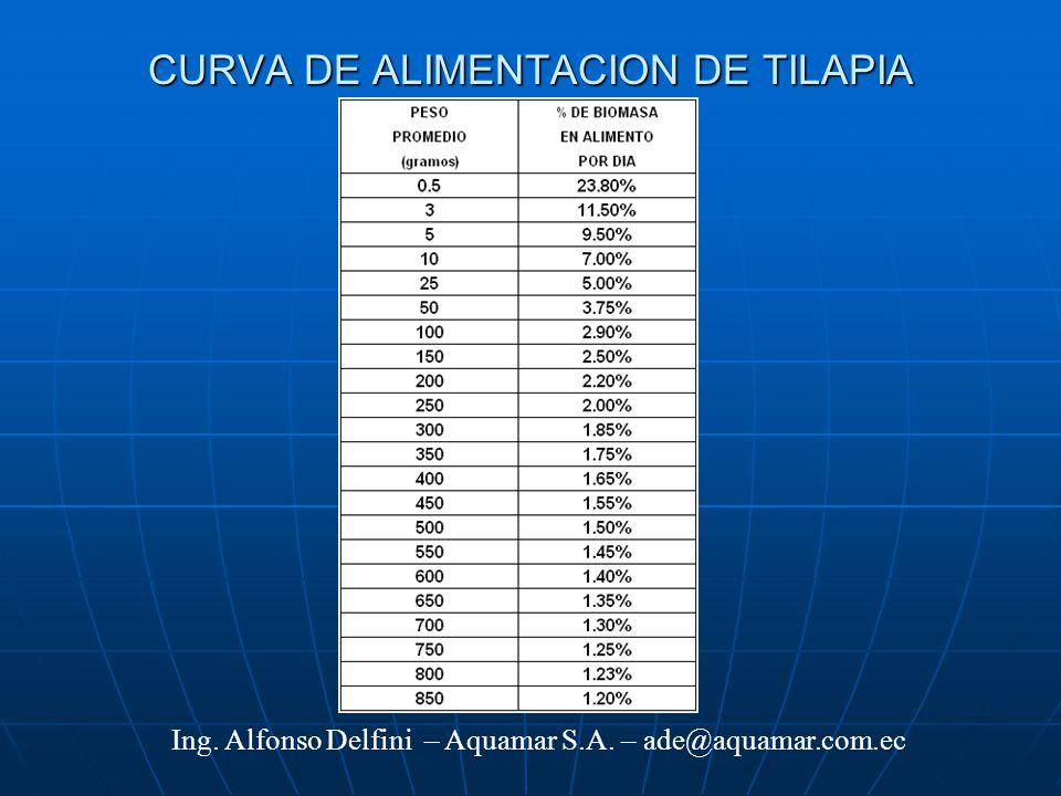 Cultivo de tilapia en estanques de tierra en ecuador ppt for Tabla de alimentacion para tilapia roja