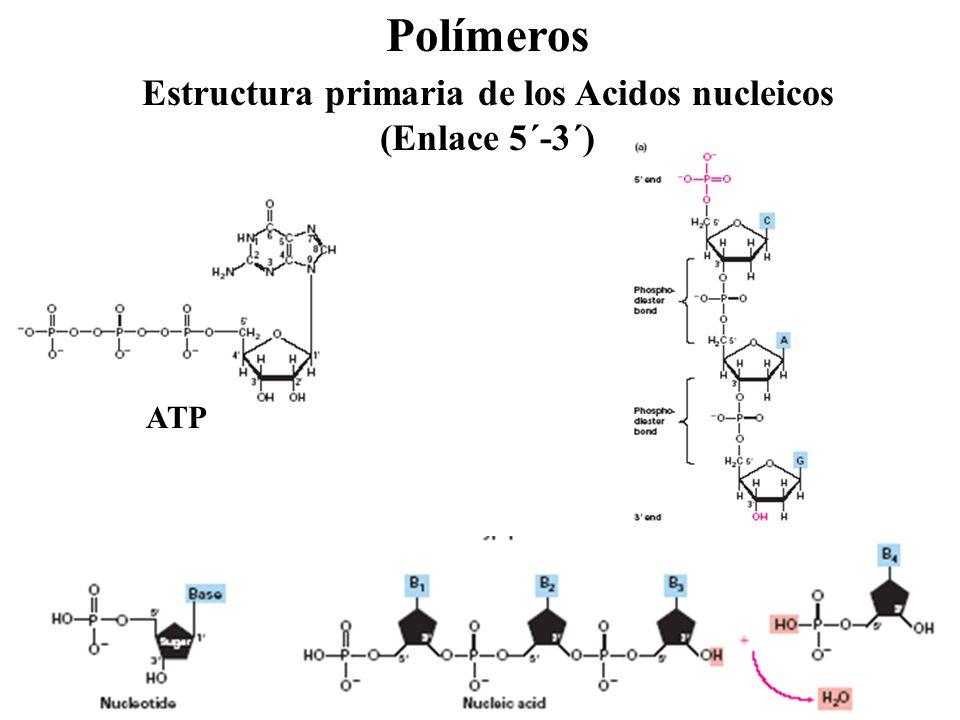 Curso biologia molecular