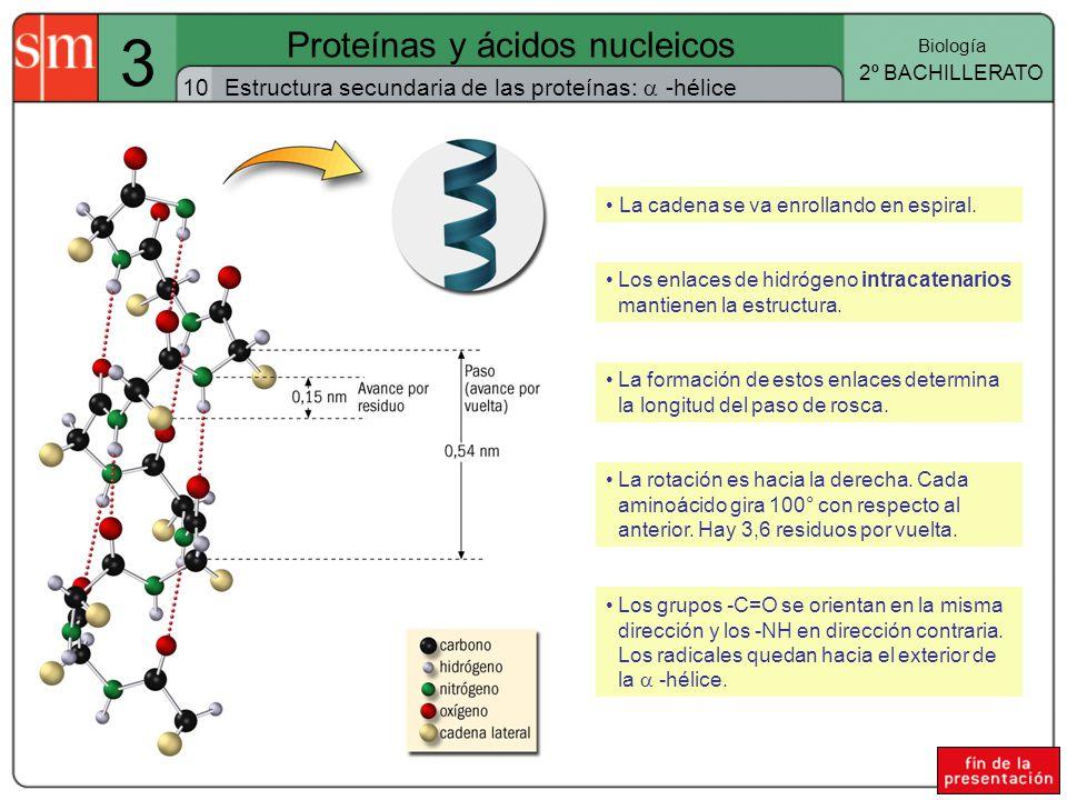 Proteínas y ácidos nucleicos - ppt video online descargar