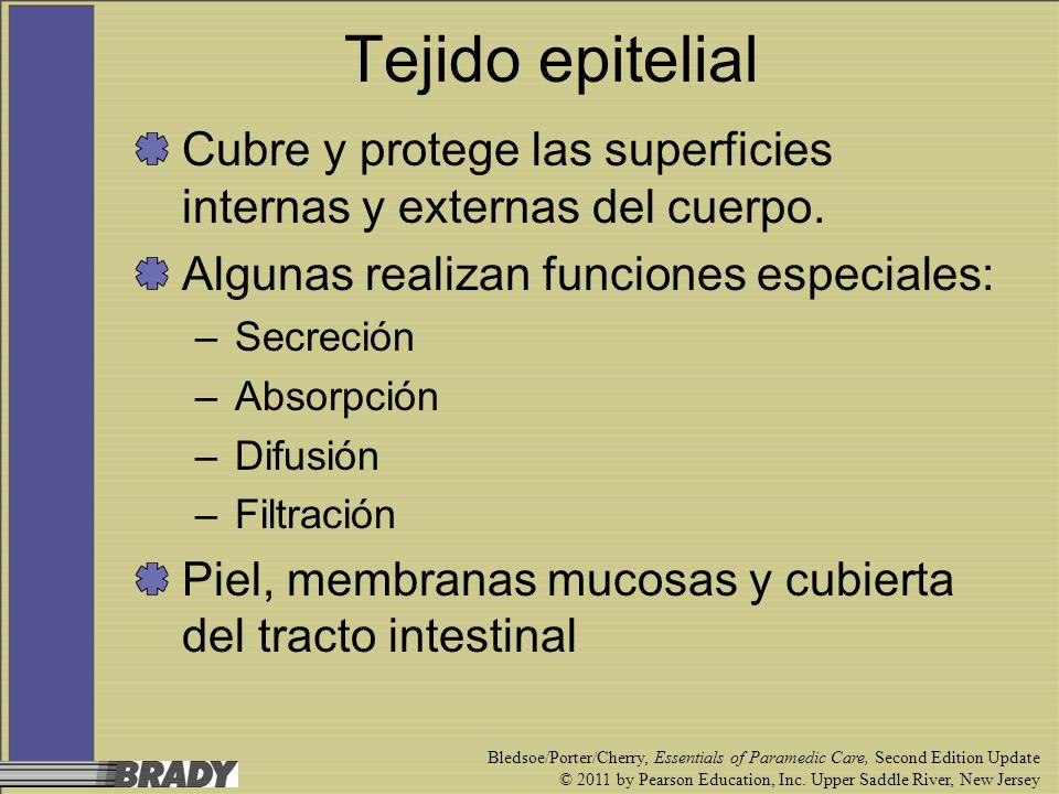 Tejido epitelialCubre y protege las superficies internas y externas del cuerpo. Algunas realizan funciones especiales:
