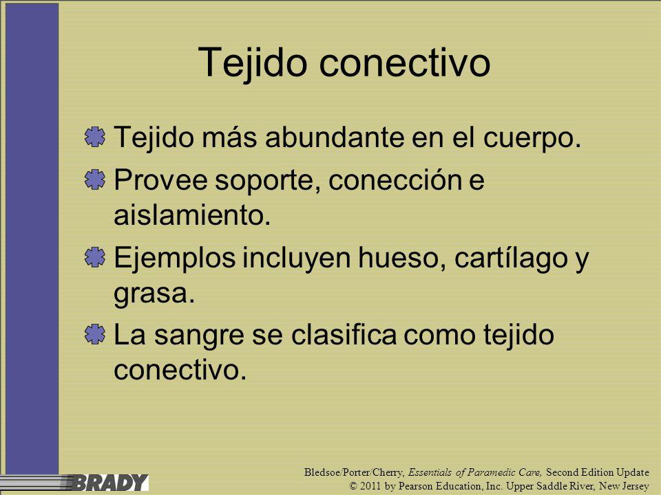 Tejido conectivo Tejido más abundante en el cuerpo.
