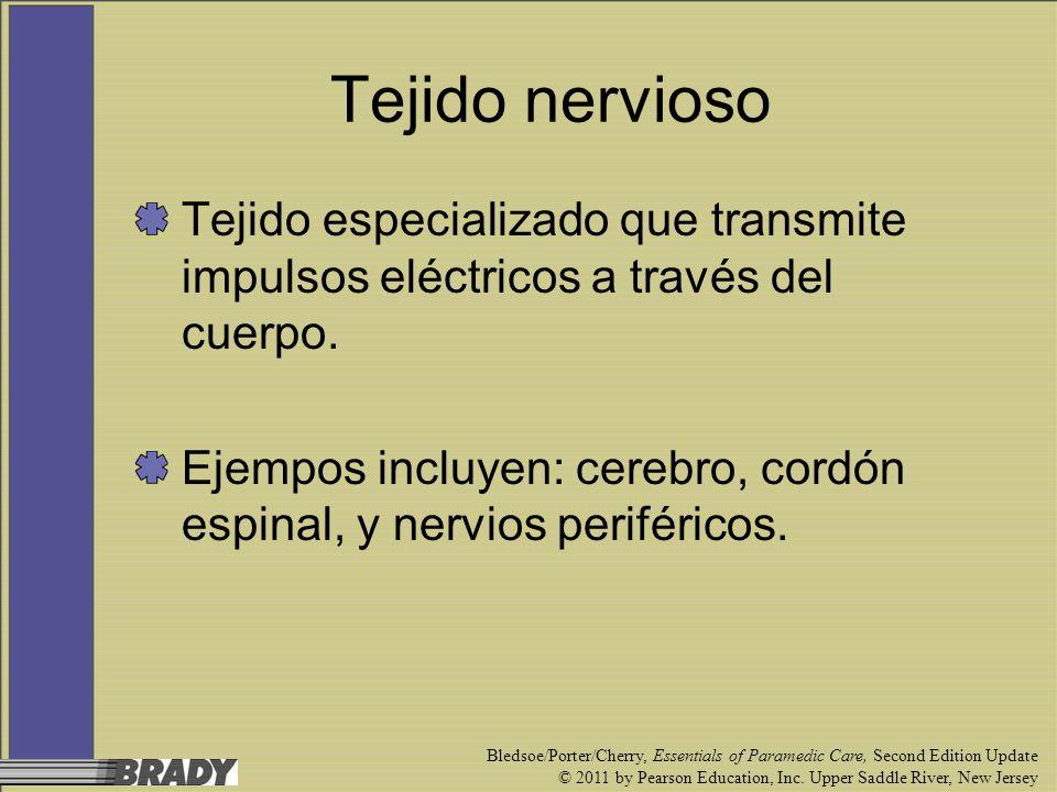 Tejido nervioso Tejido especializado que transmite impulsos eléctricos a través del cuerpo.