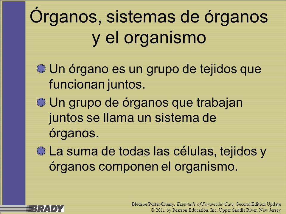 Órganos, sistemas de órganos y el organismo