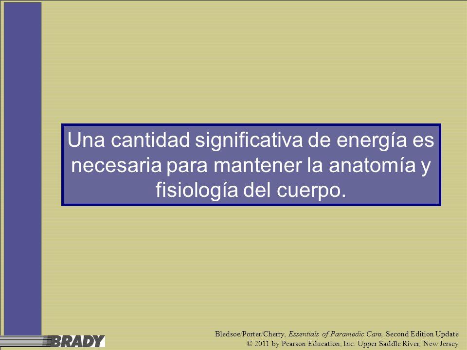 Una cantidad significativa de energía es necesaria para mantener la anatomía y fisiología del cuerpo.