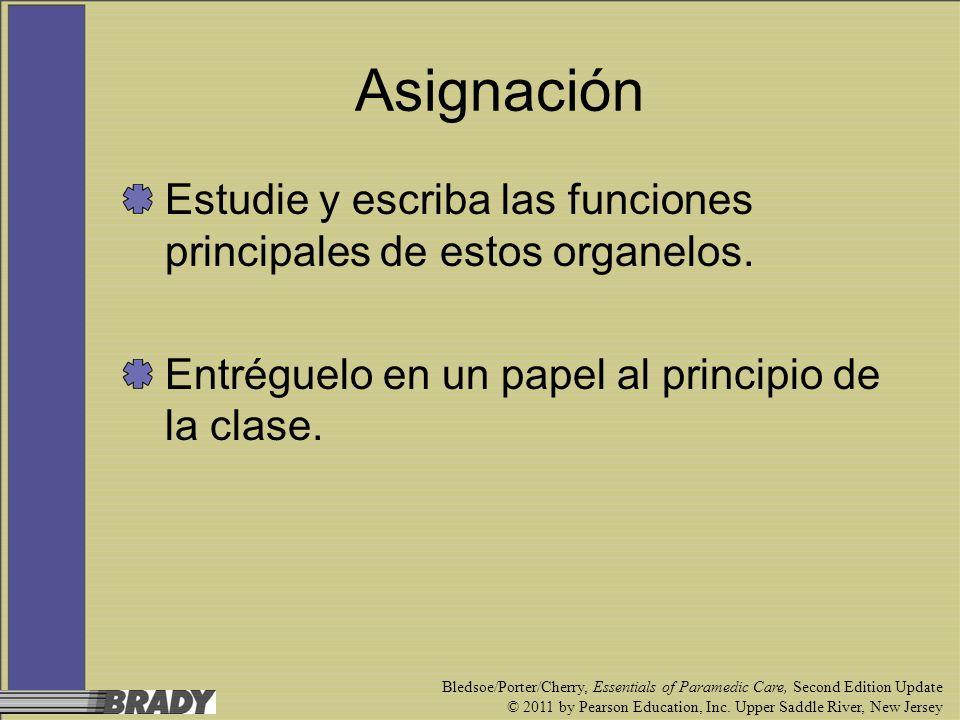 Asignación Estudie y escriba las funciones principales de estos organelos. Entréguelo en un papel al principio de la clase.