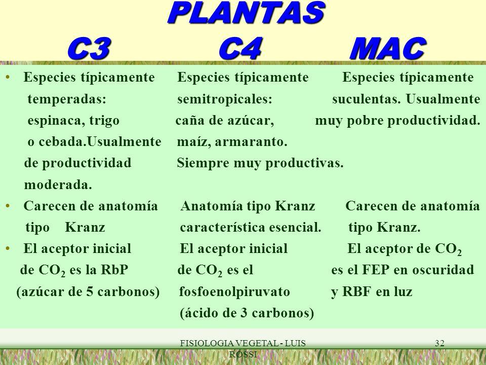Único Anatomía De Plantas C3 Y C4 Regalo - Anatomía de Las ...