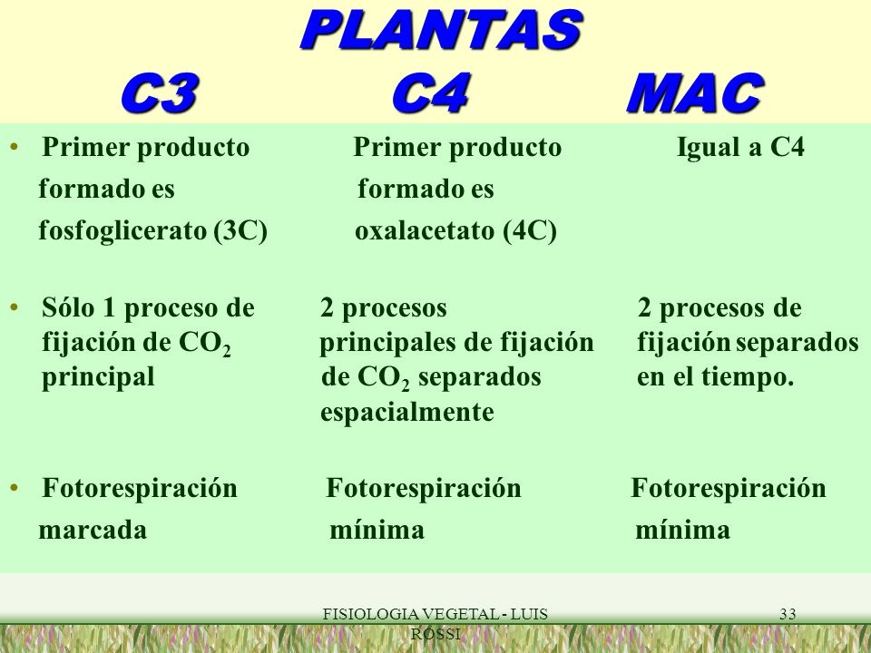 Fantástico Hoja Anatomía De C3 Plantas C4 Y Cam Foto - Anatomía de ...