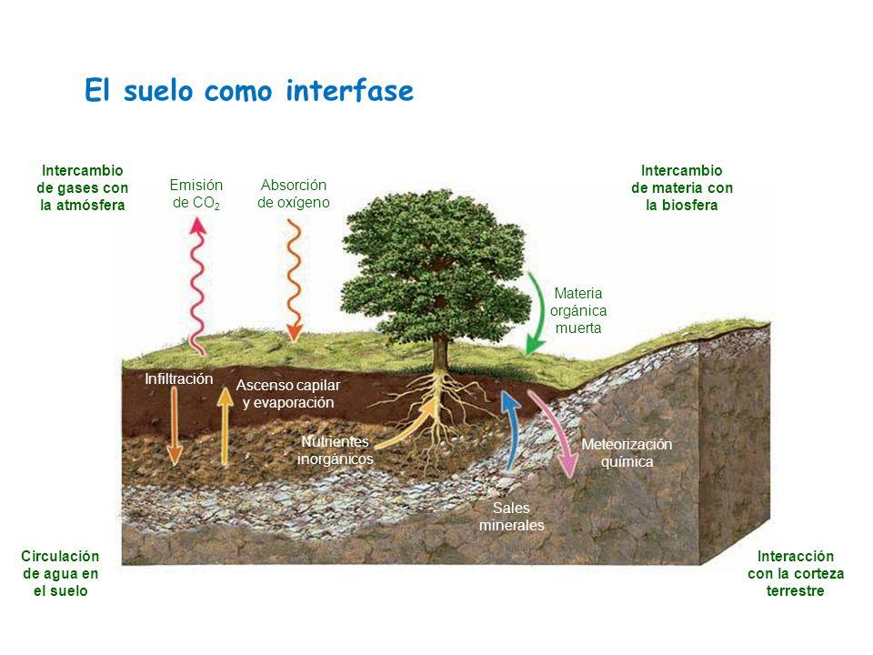 Tema 6 1 el suelo 1 concepto 2 descripci n composici n for Como estan formados los suelos