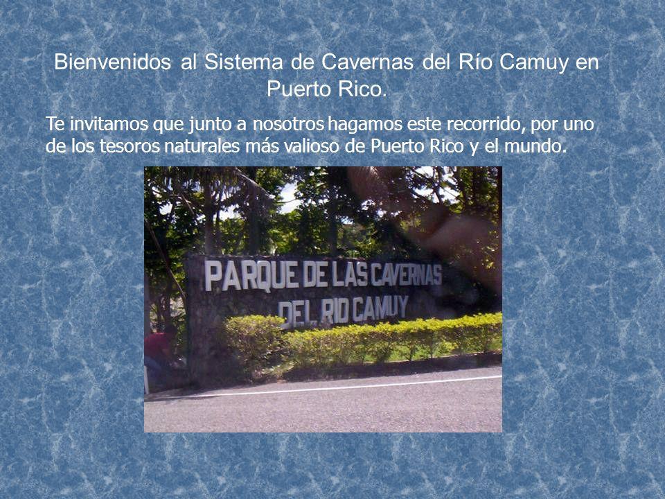 Bienvenidos al Sistema de Cavernas del Río Camuy en Puerto Rico.