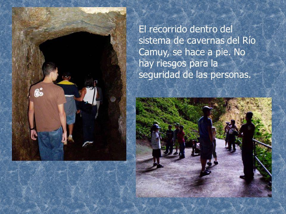 El recorrido dentro del sistema de cavernas del Río Camuy, se hace a pie.