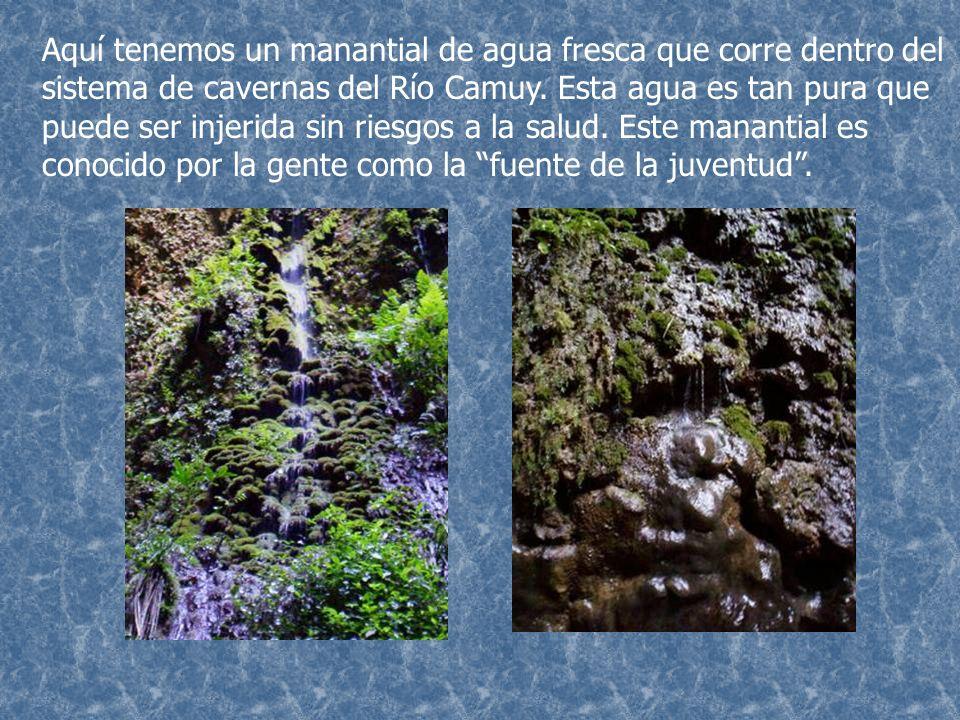 Aquí tenemos un manantial de agua fresca que corre dentro del sistema de cavernas del Río Camuy.