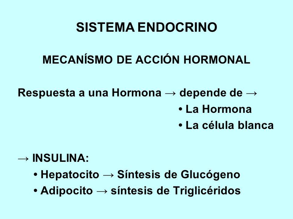 MECANÍSMO DE ACCIÓN HORMONAL