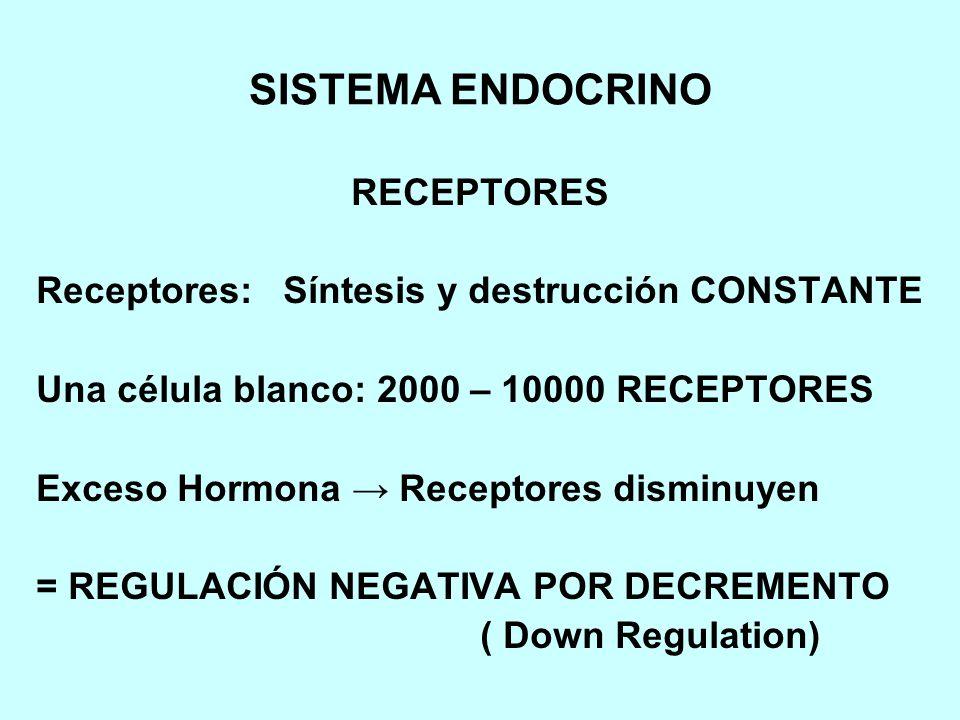 SISTEMA ENDOCRINO RECEPTORES