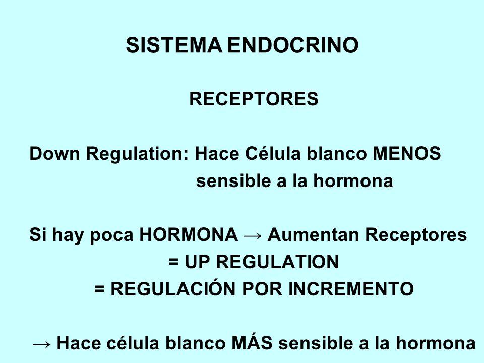 SISTEMA ENDOCRINO RECEPTORES Down Regulation: Hace Célula blanco MENOS