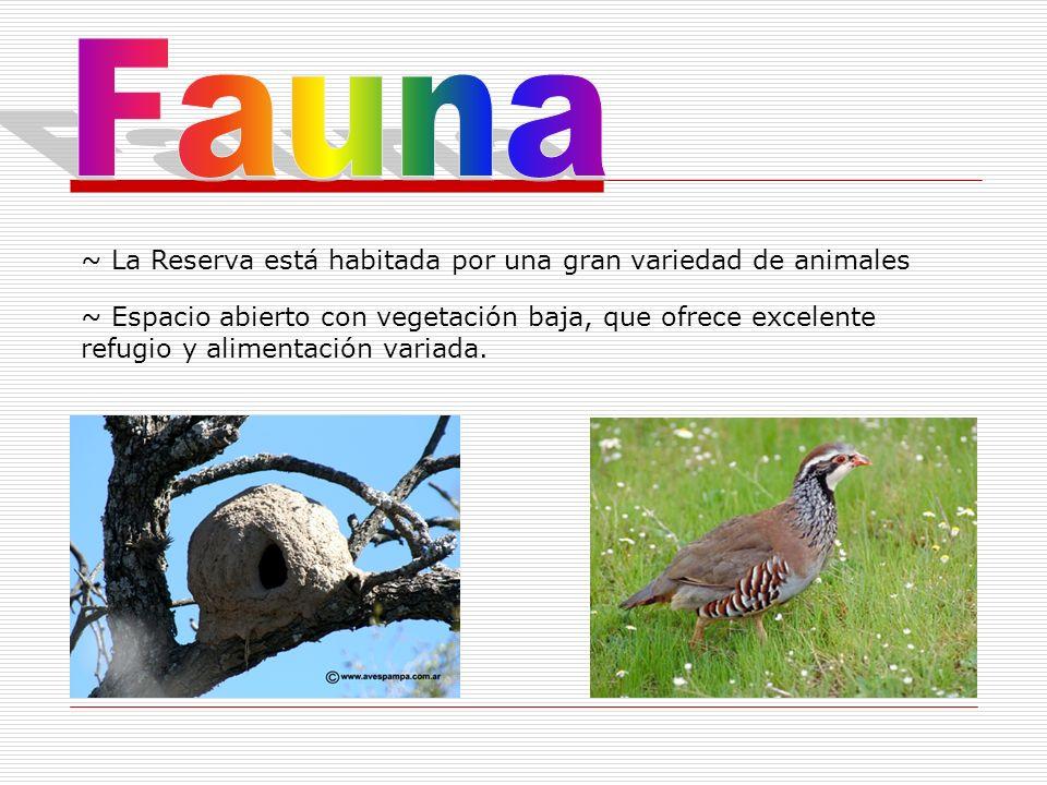 Fauna ~ La Reserva está habitada por una gran variedad de animales