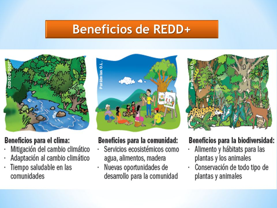 Beneficios de REDD+