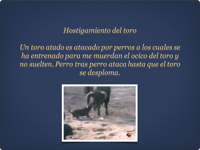 Hostigamiento del toro