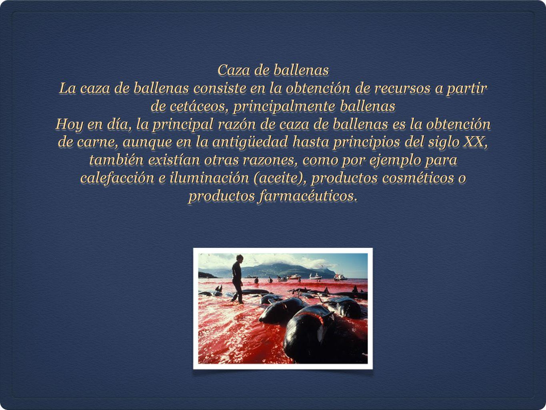Caza de ballenas La caza de ballenas consiste en la obtención de recursos a partir de cetáceos, principalmente ballenas.
