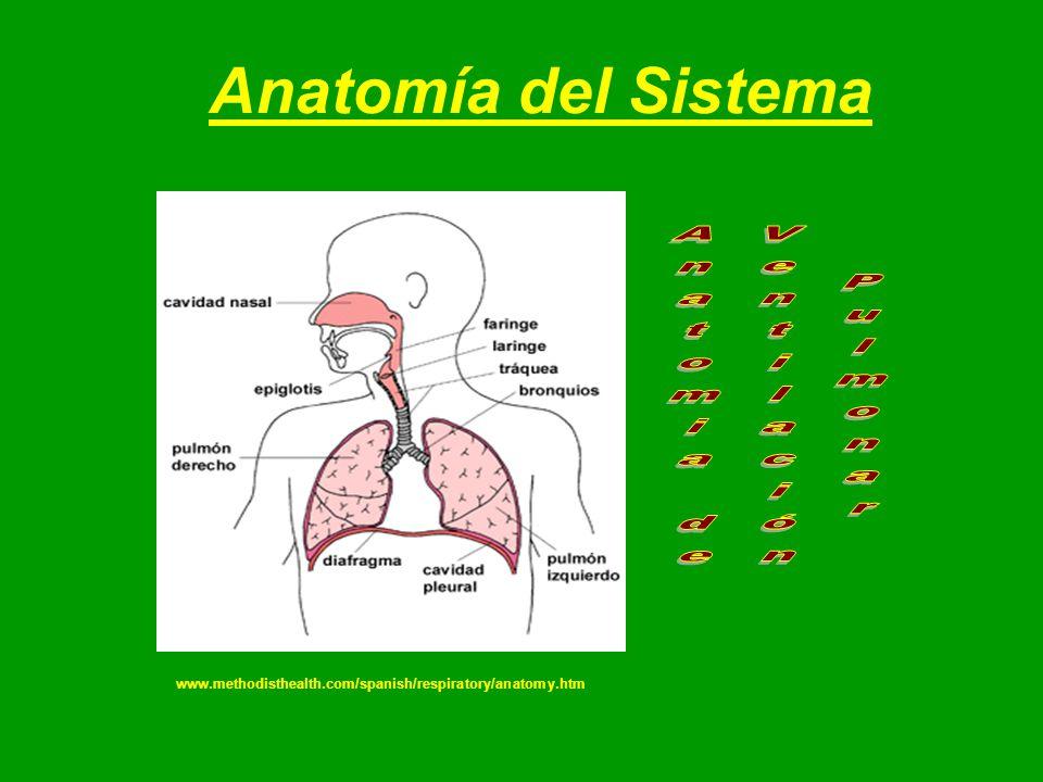 Único Phd En La Anatomía Friso - Imágenes de Anatomía Humana ...