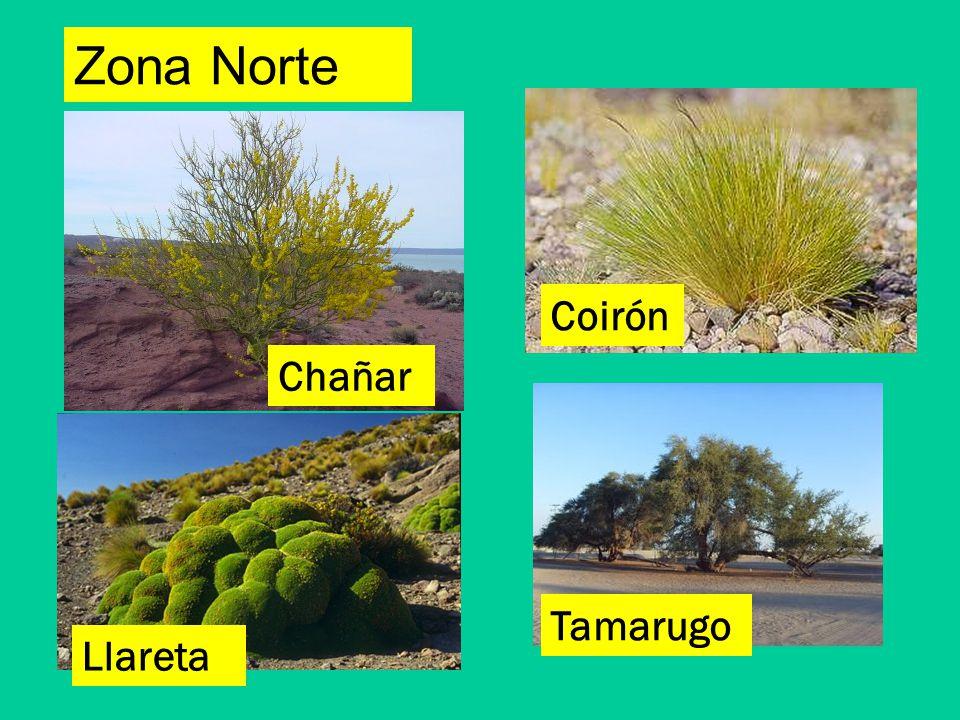 Unidad 1 las plantas 3 b sico a b ppt video online for Marmoles y granitos zona norte