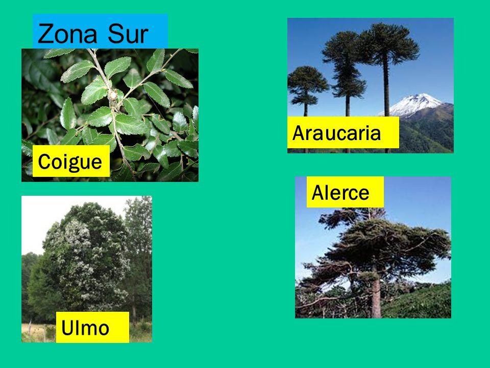 Unidad 1 las plantas 3 b sico a b ppt video online for Poda de arboles zona sur
