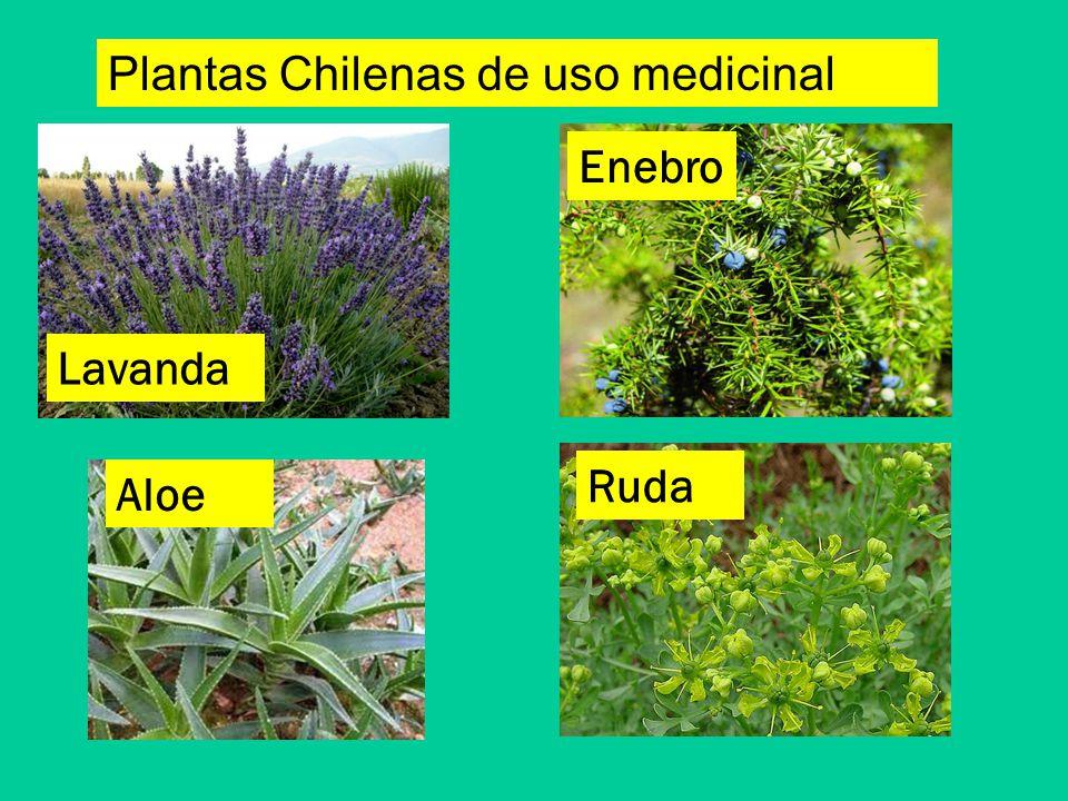 Unidad 1 Las Plantas 3 B Sico A B Ppt Video Online