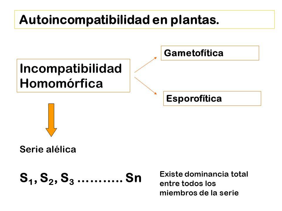 Clase teorica n 5 semana 6 al 10 de septiembre de 2010 for Incompatibilidad en plantas