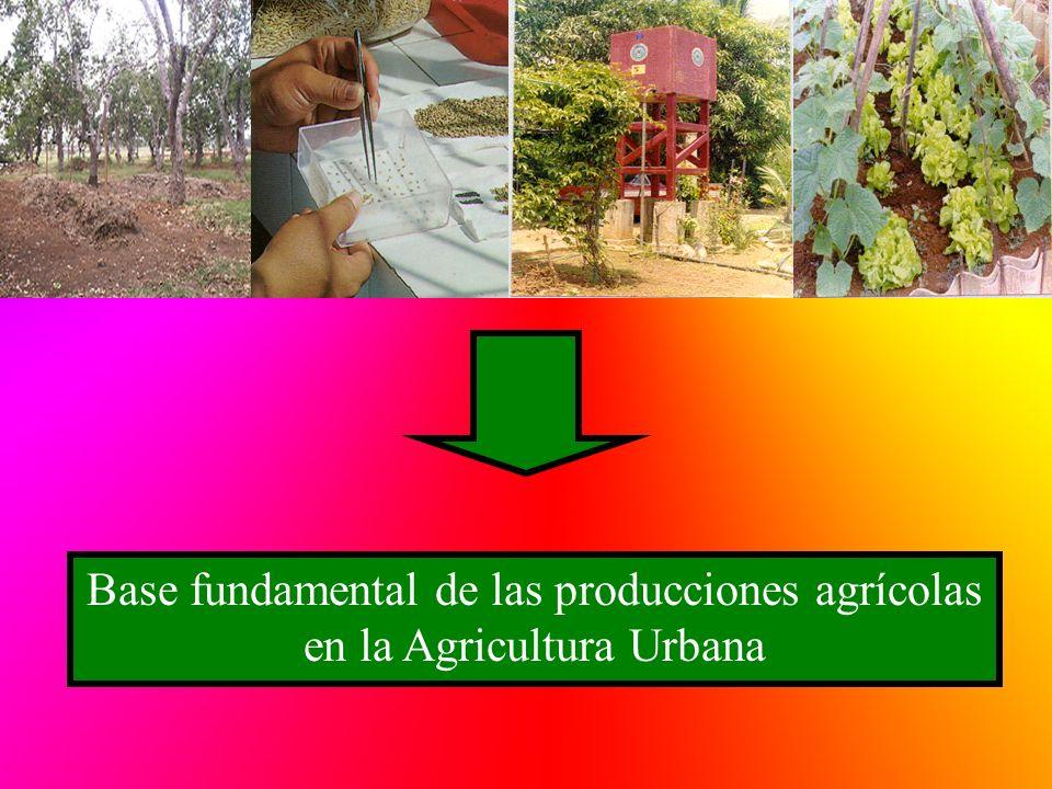 Base fundamental de las producciones agrícolas en la Agricultura Urbana