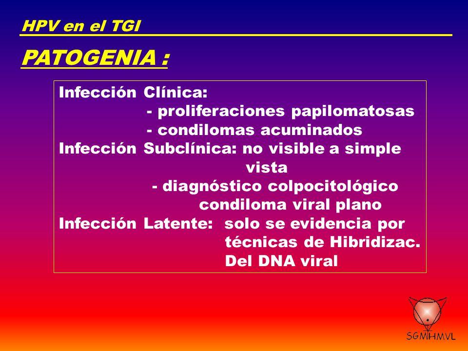 PATOGENIA : HPV en el TGI Infección Clínica: