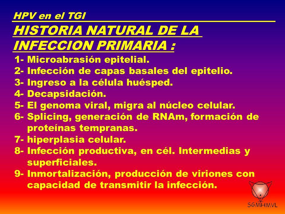HISTORIA NATURAL DE LA INFECCION PRIMARIA : HPV en el TGI