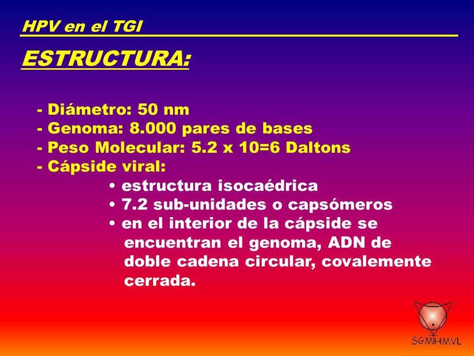 ESTRUCTURA: HPV en el TGI - Diámetro: 50 nm