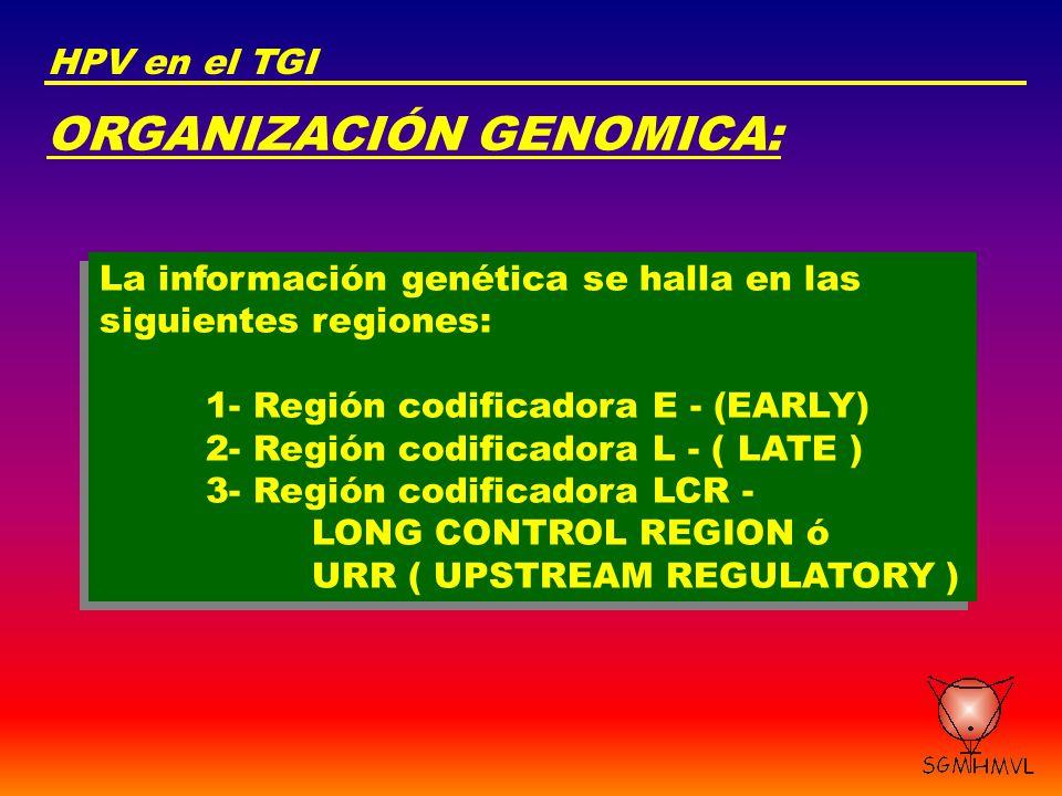 ORGANIZACIÓN GENOMICA: