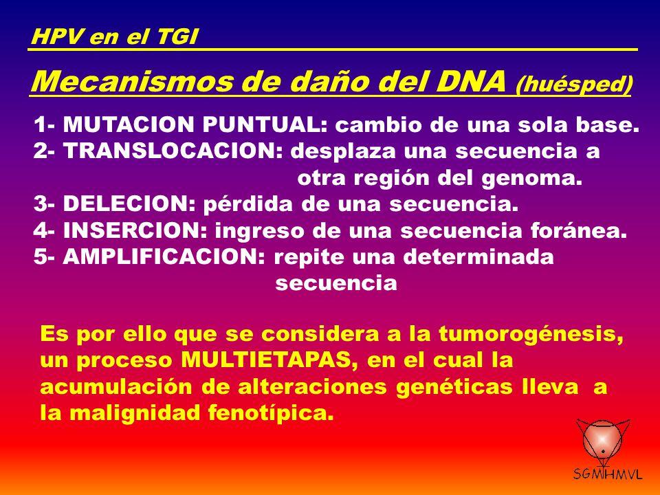 Mecanismos de daño del DNA (huésped)